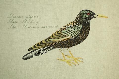 Boras BIRDS Ann-Cathrine Sigrid_stare